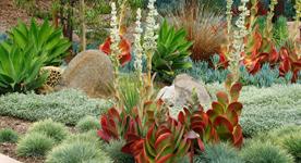 rebates for Drought Tolerant Landscape