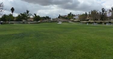 Quail-Valley-Park-Open-Grass