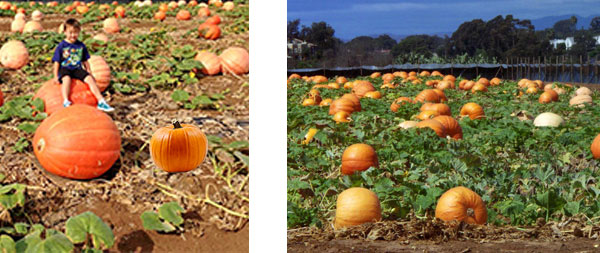 carlsbad-pumpkin-patch
