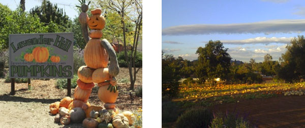 fallbrook-pumpkin-patch