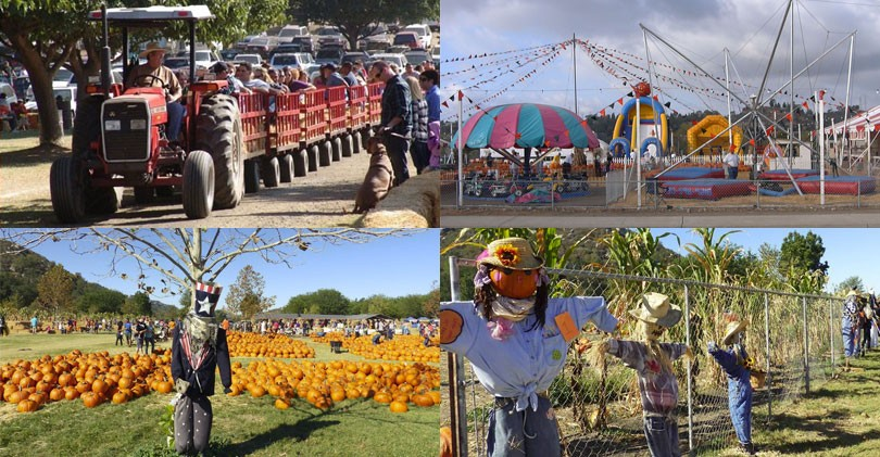 north-county-pumpkin-patches