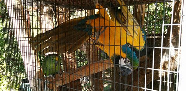 buena-creek-gardens-parrots