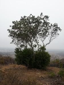 SantaFeHills-Hike1-June29(KC)
