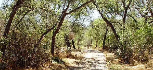 wilderness-gardens-preserve