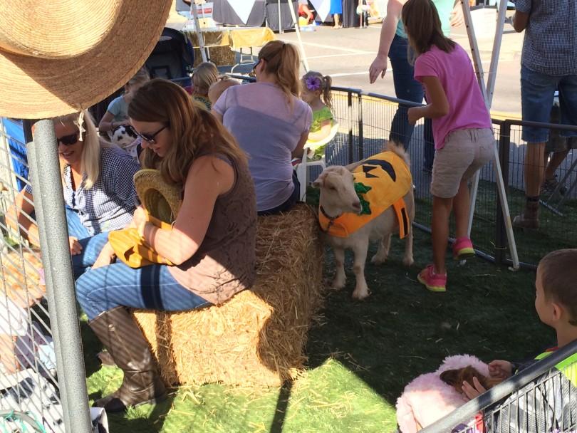 Fallbrook Harvest Faire petting zoo