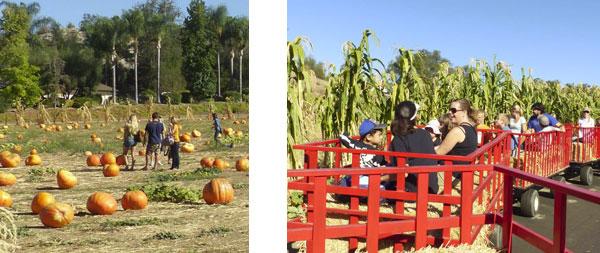Valley-Center-Pumpkin-Patch-Bates-Nut-Farm
