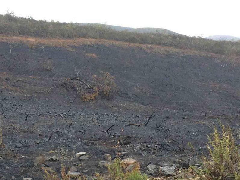 brushfire-damage