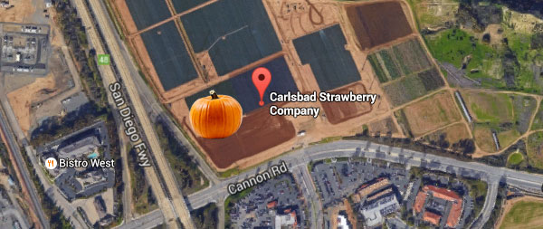 carlsbad-pumpkins-strawberry